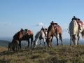 horses_boquete